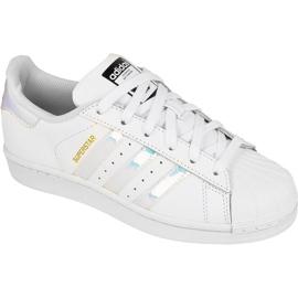 Adidas Originals Superstar Jr AQ6278 kengät valkoinen